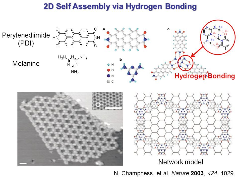 2D Self Assembly via Hydrogen Bonding N.Champness.