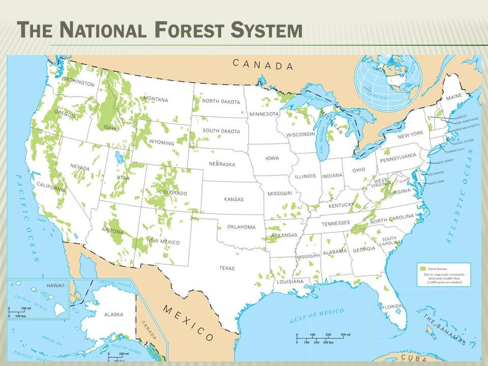 F OREST S ERVICE O RGANIZATION Forest Service National Forest System Research State & Private Forestry