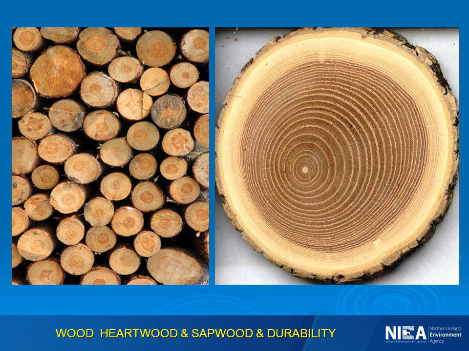 WOOD HEARTWOOD & SAPWOOD & DURABILITY