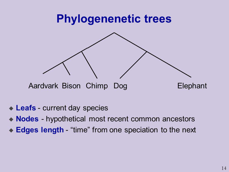 14 Phylogenenetic trees u Leafs - current day species u Nodes - hypothetical most recent common ancestors u Edges length - time from one speciation to