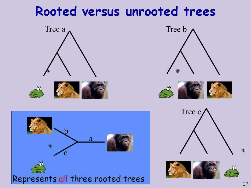 17 Rooted versus unrooted trees Tree a a b Tree b c Tree c Represents all three rooted trees
