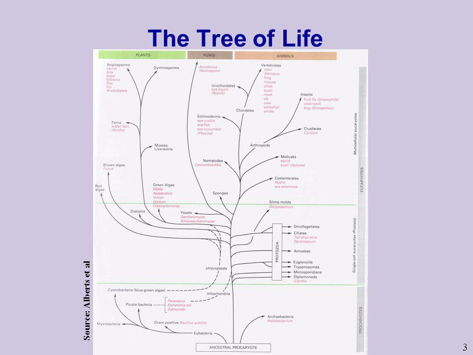 3 The Tree of Life Source: Alberts et al