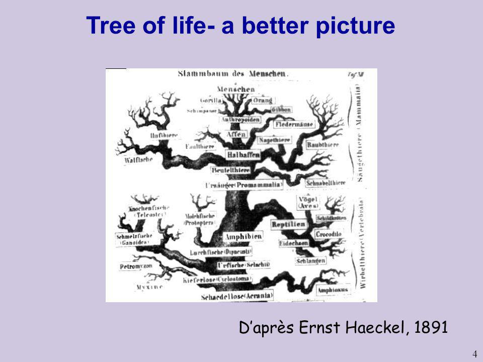 4 Daprès Ernst Haeckel, 1891 Tree of life- a better picture