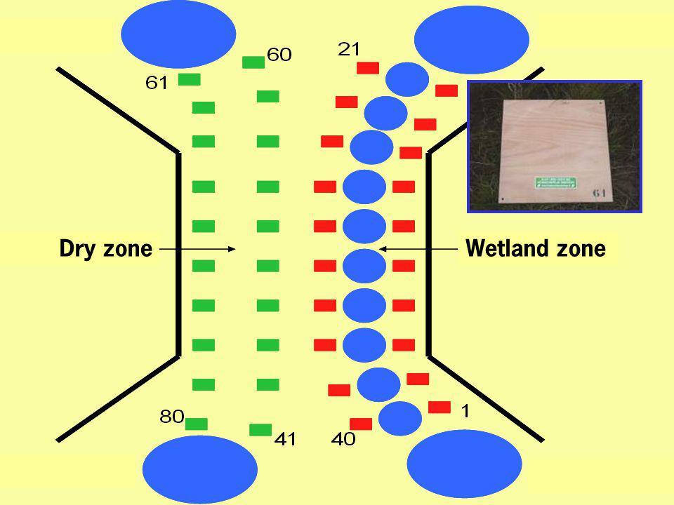 Wetland zoneDry zone