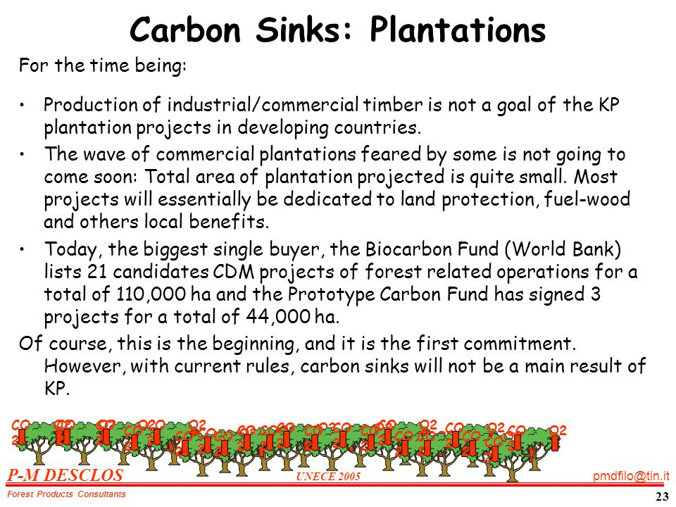 P-M DESCLOS UNECE 2005 pmdfilo@tin.it Forest Products Consultants 23 Carbon Sinks: Plantations For the time being: Production of industrial/commercial timber is not a goal of the KP plantation projects in developing countries.