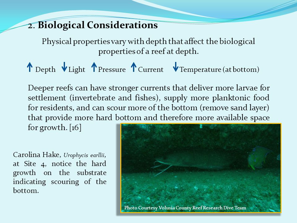 2. Biological Considerations Physical properties vary with depth that affect the biological properties of a reef at depth. Depth Light Pressure Curren