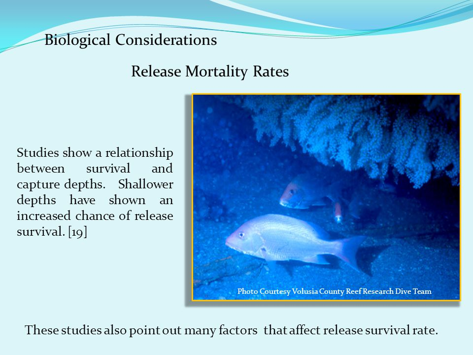 Release Mortality Rates Biological Considerations Studies show a relationship between survival and capture depths. Shallower depths have shown an incr