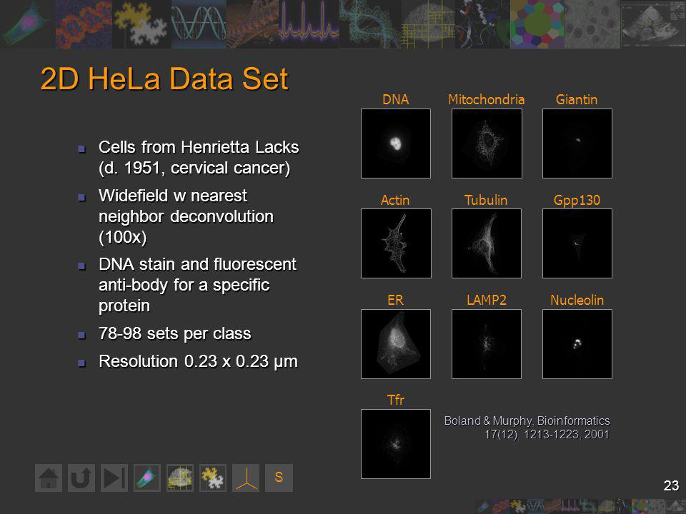 S 23 2D HeLa Data Set Cells from Henrietta Lacks (d.