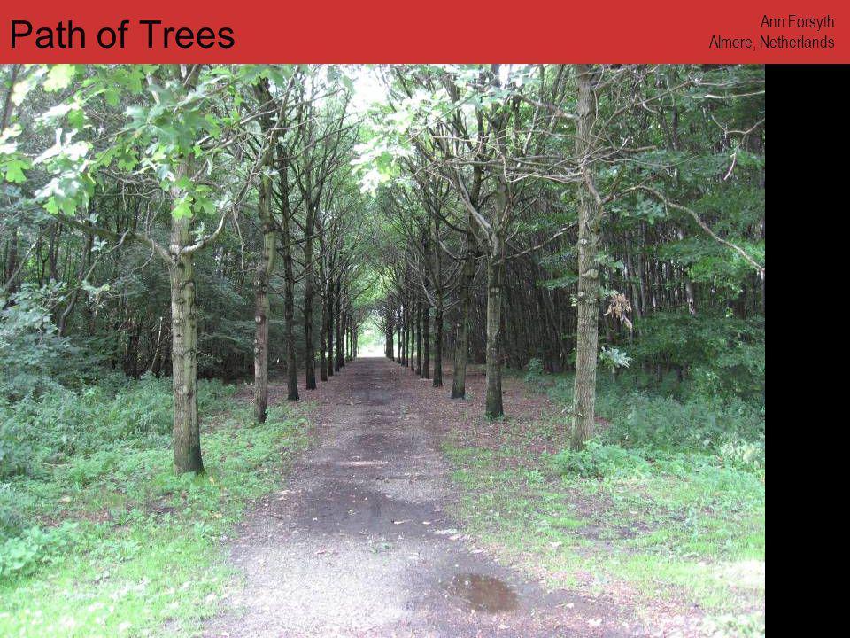 www.annforsyth.net Path of Trees Ann Forsyth Almere, Netherlands