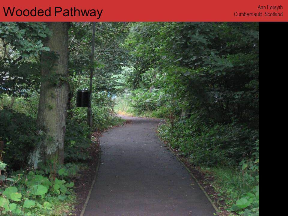 www.annforsyth.net Wooded Pathway Ann Forsyth Cumbernauld, Scotland