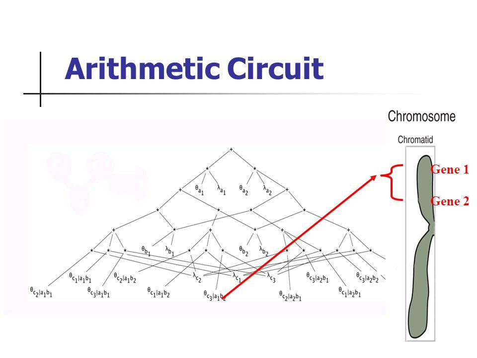 Arithmetic Circuit Gene 1 Gene 2
