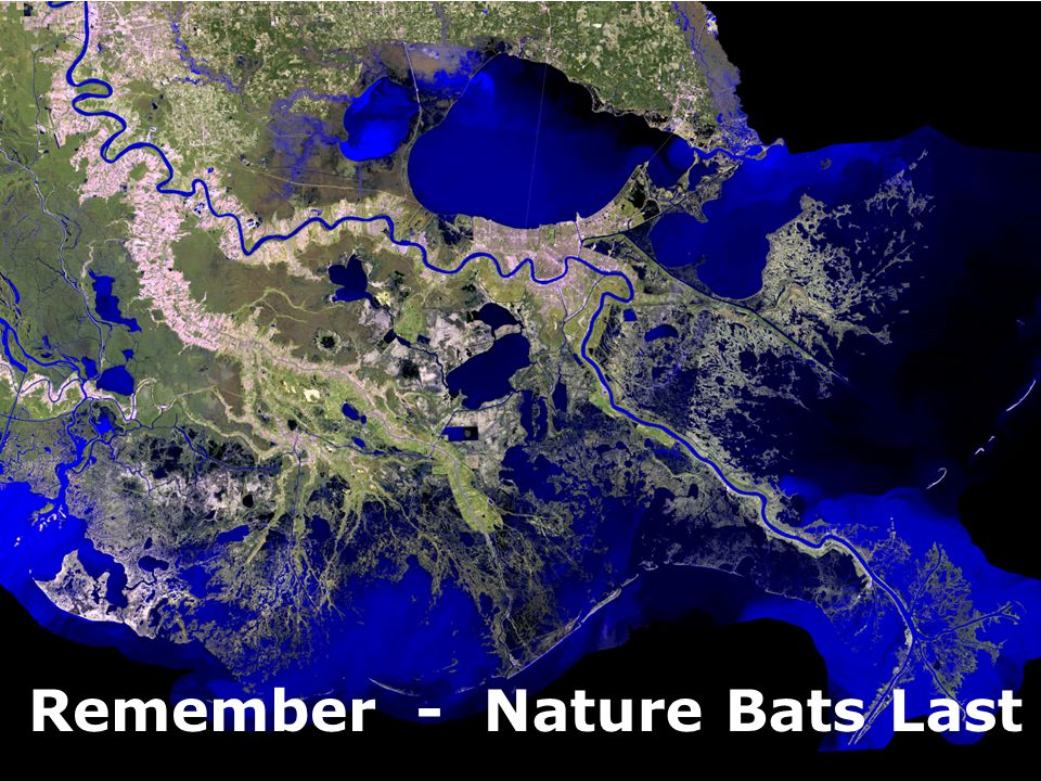 100 Years of Civil Engineering at Maryland - Nature Bats LastRemember