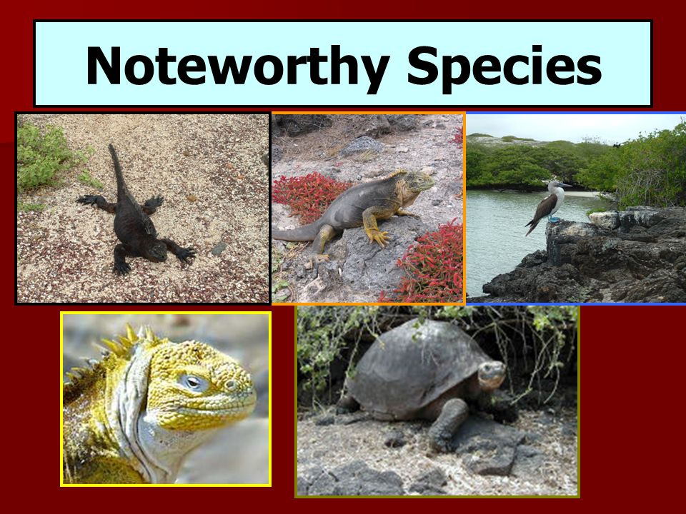 Noteworthy Species