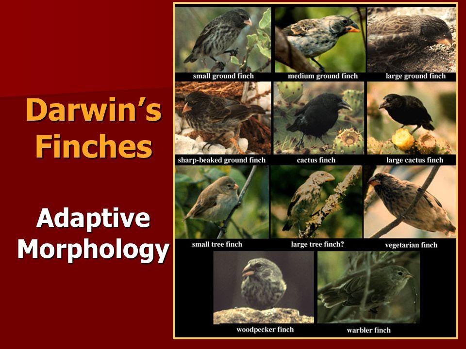 Darwins Finches Adaptive Morphology