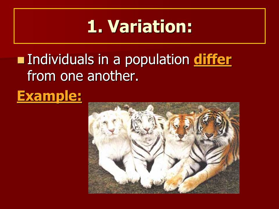 Individuals in a population differ from one another. Individuals in a population differ from one another.Example: 1. Variation: