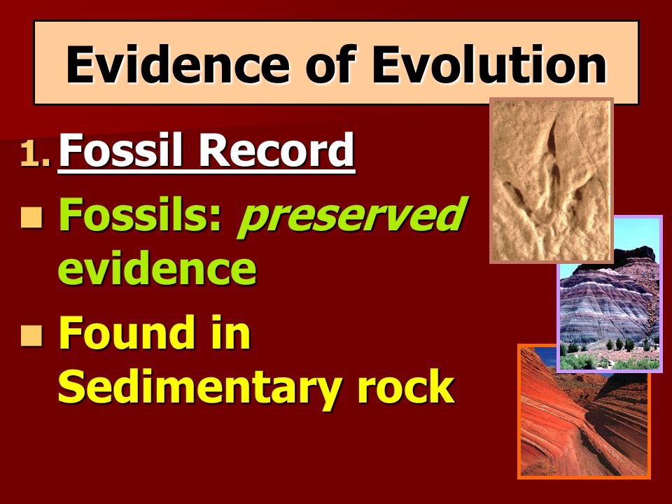 Evidence of Evolution 1. Fossil Record Fossils: preserved evidence Fossils: preserved evidence Found in Sedimentary rock Found in Sedimentary rock