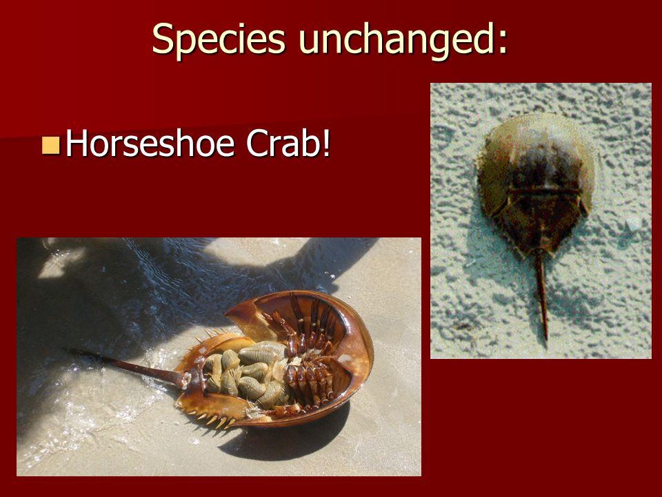 Species unchanged: Horseshoe Crab! Horseshoe Crab!