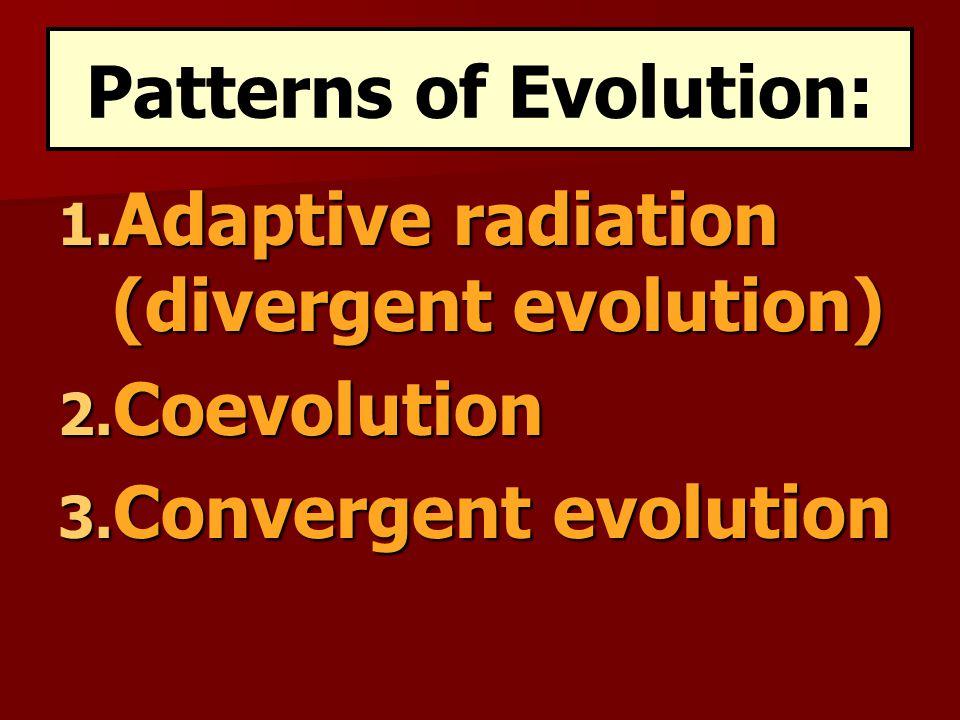 1.Adaptive radiation (divergent evolution) 2. Coevolution 3.