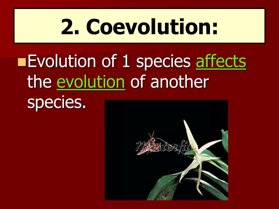 Evolution of 1 species affects the evolution of another species. Evolution of 1 species affects the evolution of another species. 2. Coevolution: