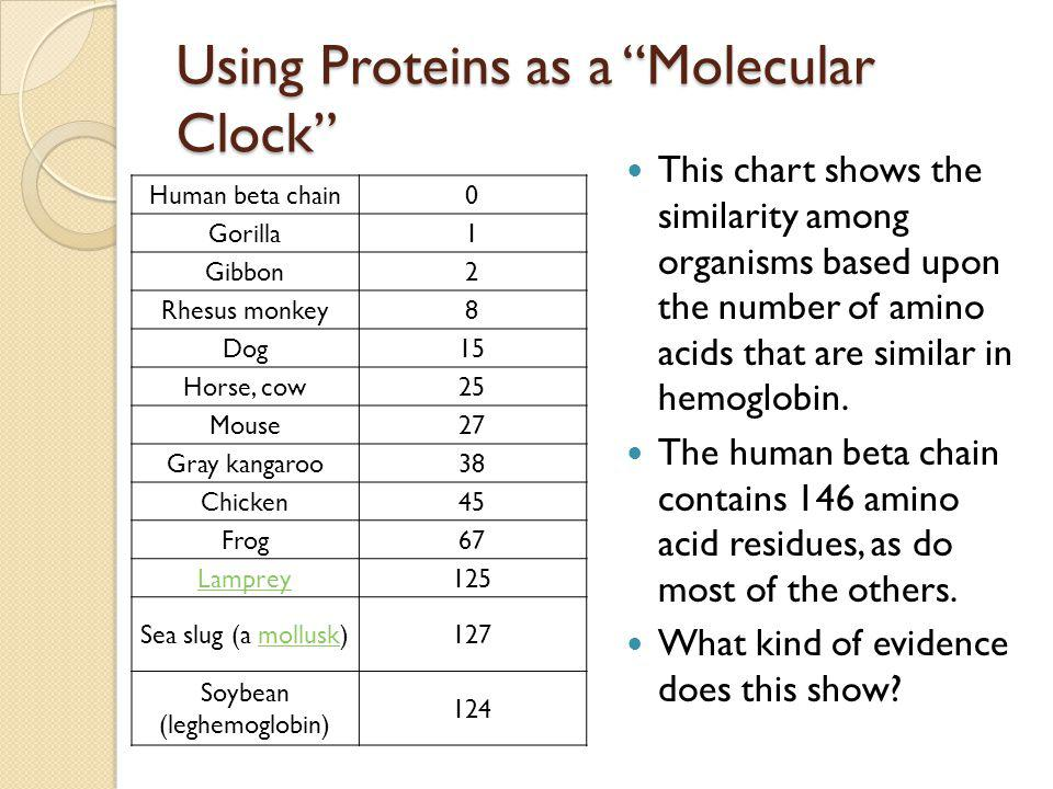 Using Proteins as a Molecular Clock Human beta chain0 Gorilla1 Gibbon2 Rhesus monkey8 Dog15 Horse, cow25 Mouse27 Gray kangaroo38 Chicken45 Frog67 Lamp
