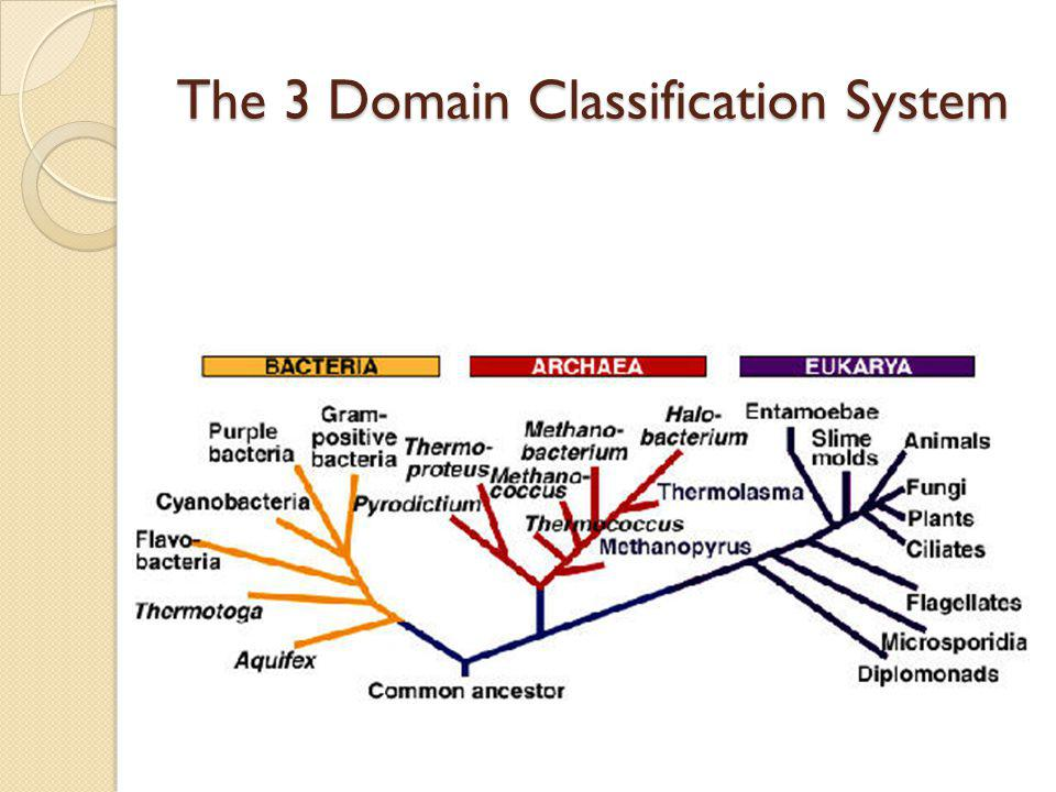 The 3 Domain Classification System