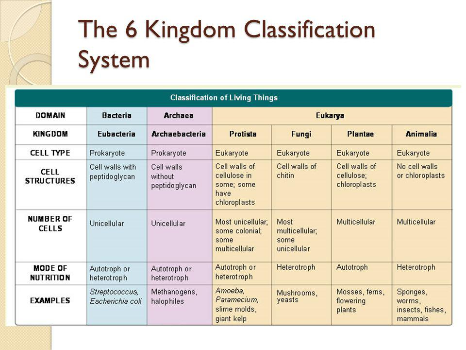 The Six Kingdoms Worksheet Delibertad – 6 Kingdoms Worksheet