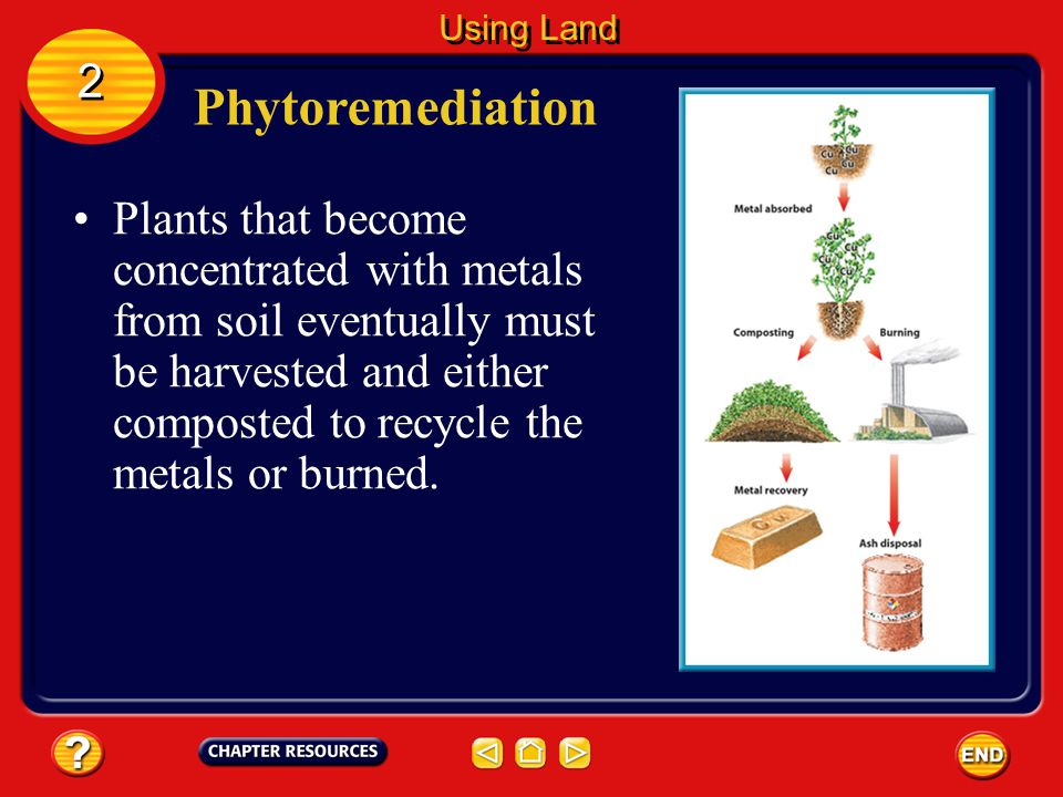 Phytoremediation 2 2 Using Land During phytoremediation, roots of certain plants such as alfalfa, grasses, and pine trees can absorb metals, including