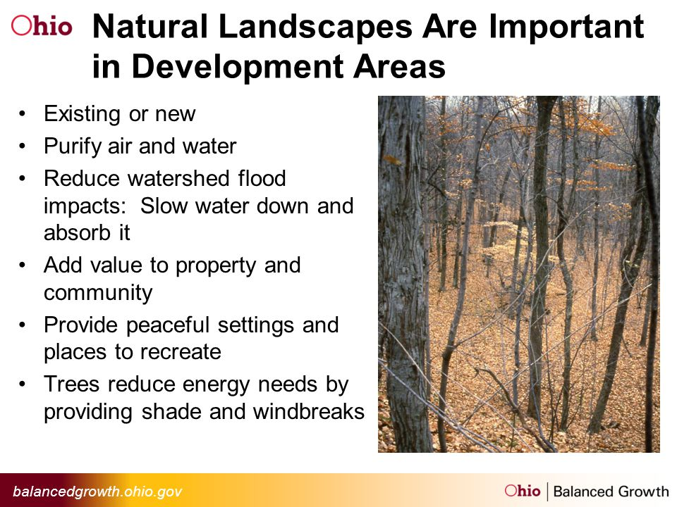 Natural Landscapes Are Important in Development Areas Existing or new Purify air and water Reduce watershed flood impacts: Slow water down and absorb it Add value to property and community Provide peaceful settings and places to recreate Trees reduce energy needs by providing shade and windbreaks
