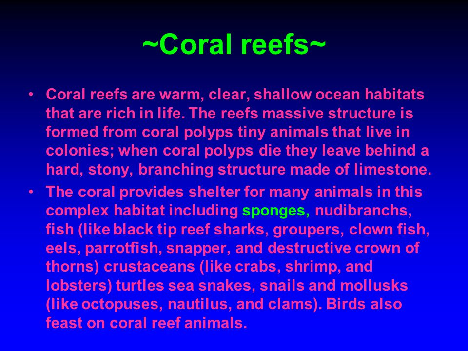 ~Coral reefs~ Coral reefs are warm, clear, shallow ocean habitats that are rich in life. The reefs massive structure is formed from coral polyps tiny