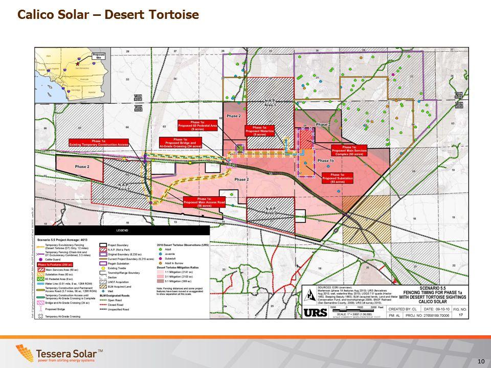 10 Calico Solar – Desert Tortoise