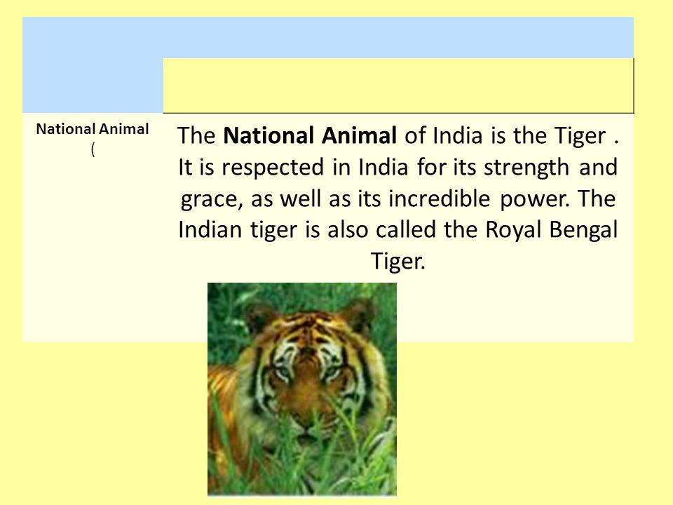 National Animal ( The National Animal of India is the Tiger. It is respected in India for its strength and grace, as well as its incredible power. The