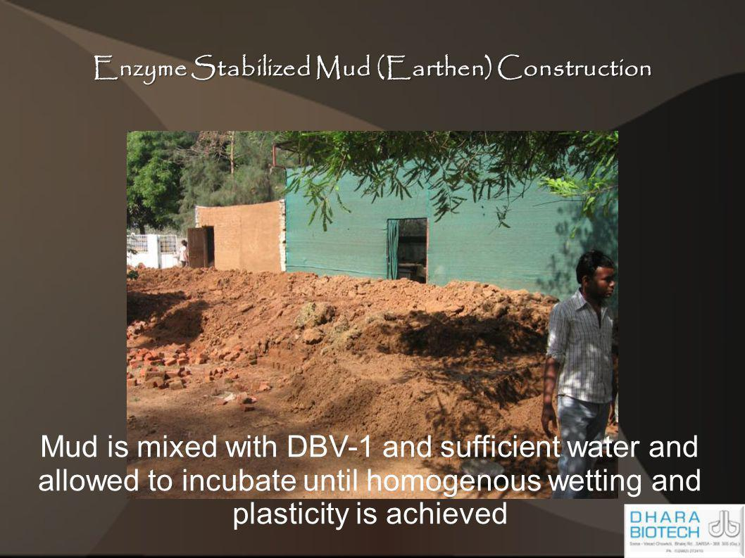 Enzyme Stabilized Mud (Earthen) Construction Mud is mixed with DBV-1 and sufficient water and allowed to incubate until homogenous wetting and plastic