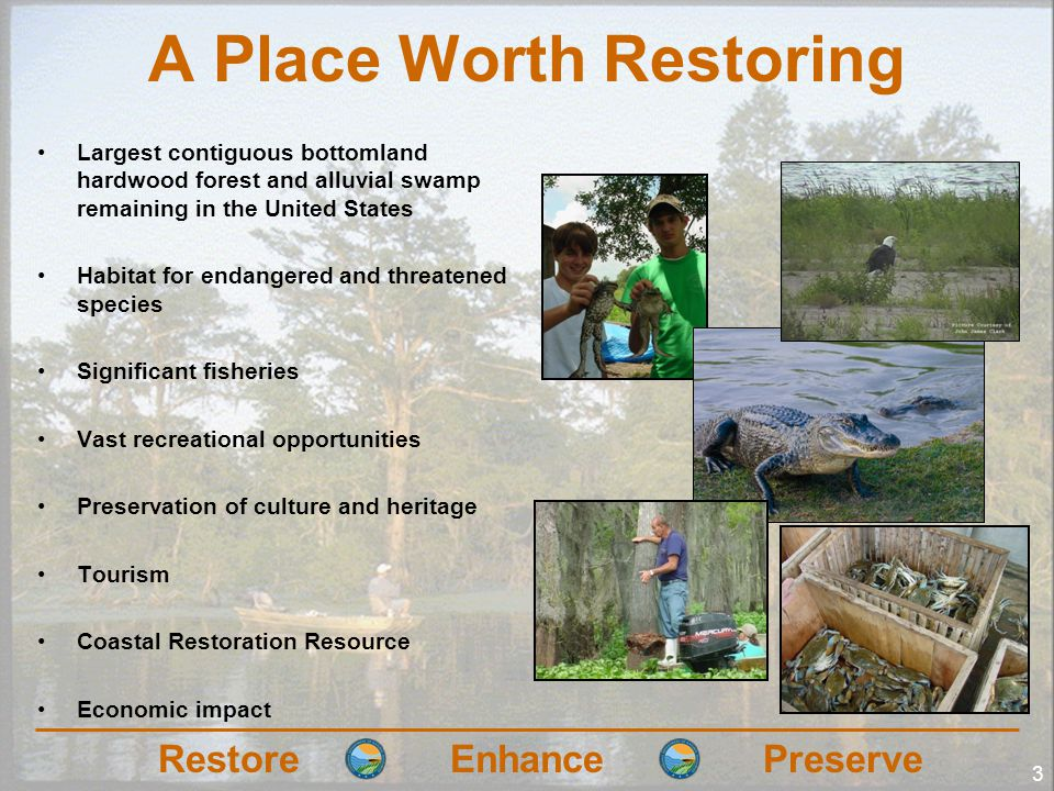 RestoreEnhancePreserve A Place Worth Restoring Largest contiguous bottomland hardwood forest and alluvial swamp remaining in the United States Habitat