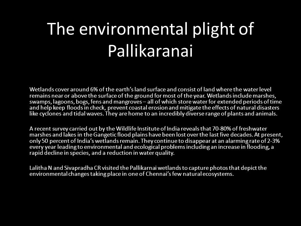 The environmental plight of Pallikaranai Wetlands cover around 6% of the earths land surface and consist of land where the water level remains near or