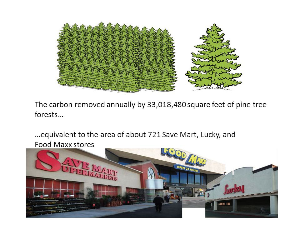 The carbon removed annually by 33,018,480 square feet of pine tree forests… …equivalent to the area of about 721 Save Mart, Lucky, and Food Maxx store