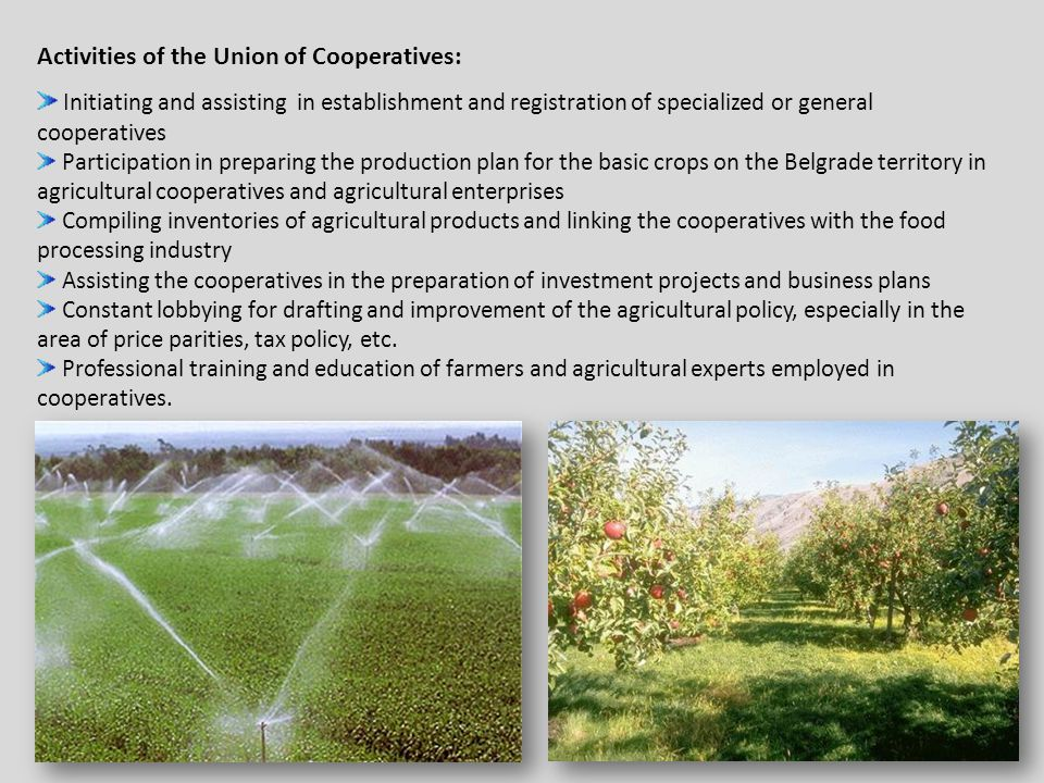 Activities of the Union of Cooperatives: Initiating and assisting in establishment and registration of specialized or general cooperatives Participation in preparing the production plan for the basic crops on the Belgrade territory in agricultural cooperatives and agricultural enterprises Compiling inventories of agricultural products and linking the cooperatives with the food processing industry Assisting the cooperatives in the preparation of investment projects and business plans Constant lobbying for drafting and improvement of the agricultural policy, especially in the area of price parities, tax policy, etc.