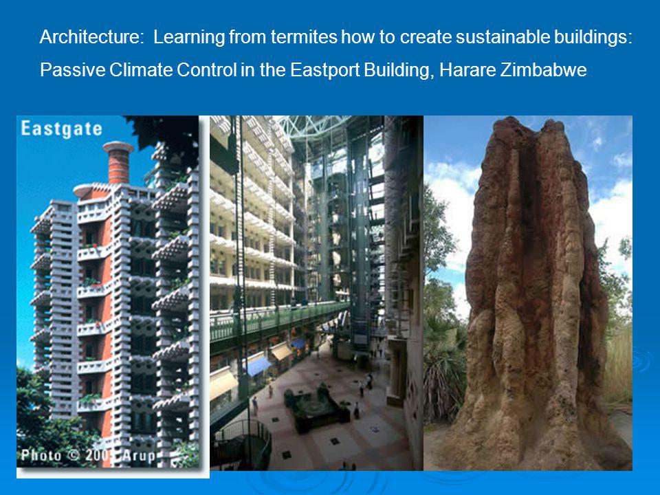 Architecture: Learning from termites how to create sustainable buildings: Passive Climate Control in the Eastport Building, Harare Zimbabwe