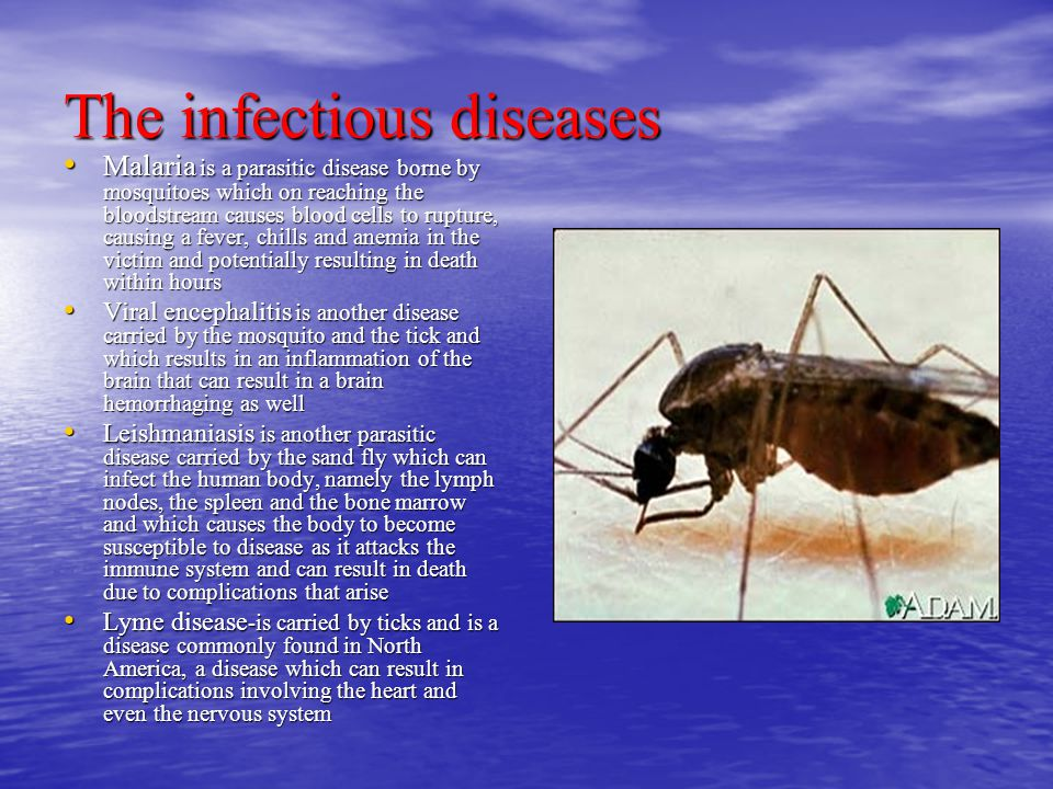 The infectious diseases Malaria is a parasitic disease borne by mosquitoes which on reaching the bloodstream causes blood cells to rupture, causing a