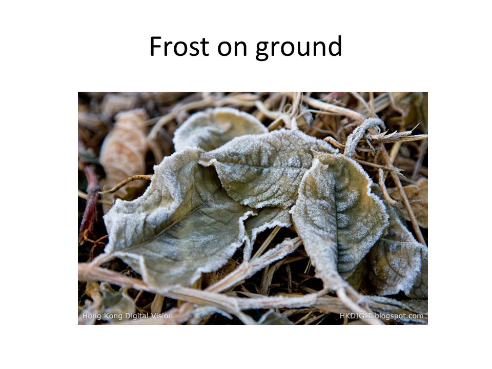 Frost on ground