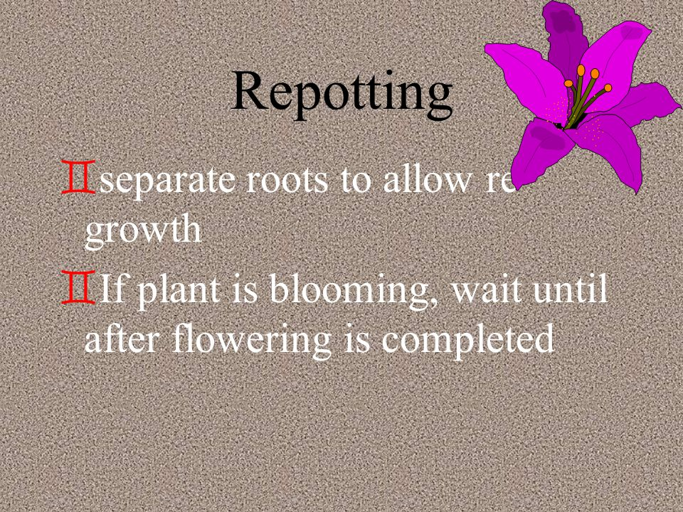 Repotting `r`repot plants when they become root bound `i`if roots are growing around the root ball `r`roots appear at the top of soil