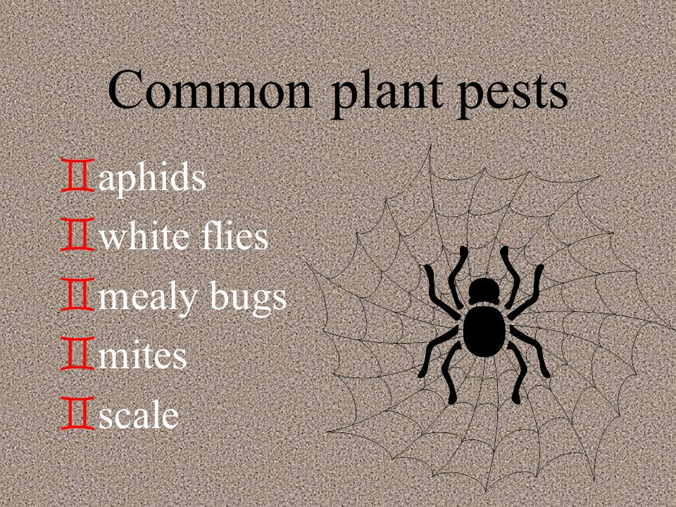 Disease and Insects `c`control pests by recognizing and controlling them on the plant