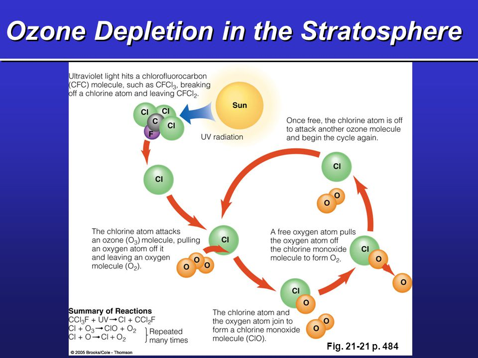 Ozone Depletion in the Stratosphere Fig. 21-21 p. 484