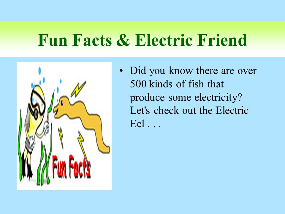 Fun Facts & Electric Friend Did you know there are over 500 kinds of fish that produce some electricity? Let's check out the Electric Eel...