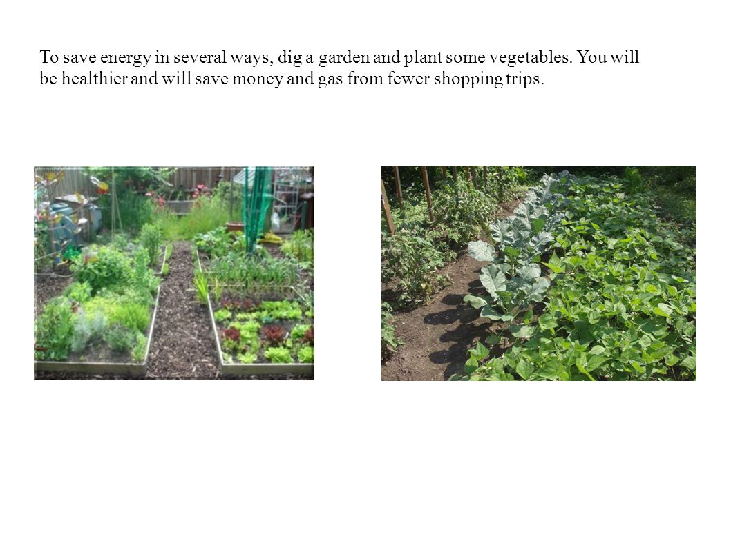 To save energy in several ways, dig a garden and plant some vegetables.