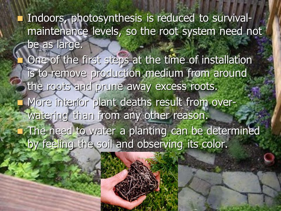 Indoors, photosynthesis is reduced to survival- maintenance levels, so the root system need not be as large.