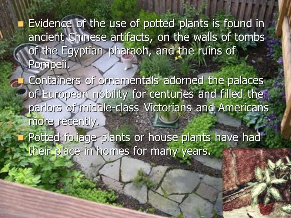 Evidence of the use of potted plants is found in ancient Chinese artifacts, on the walls of tombs of the Egyptian pharaoh, and the ruins of Pompeii.