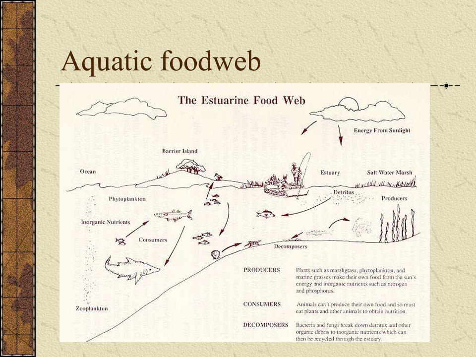 Aquatic foodweb