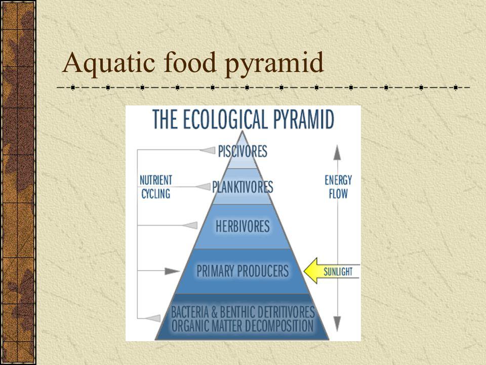 Aquatic food pyramid