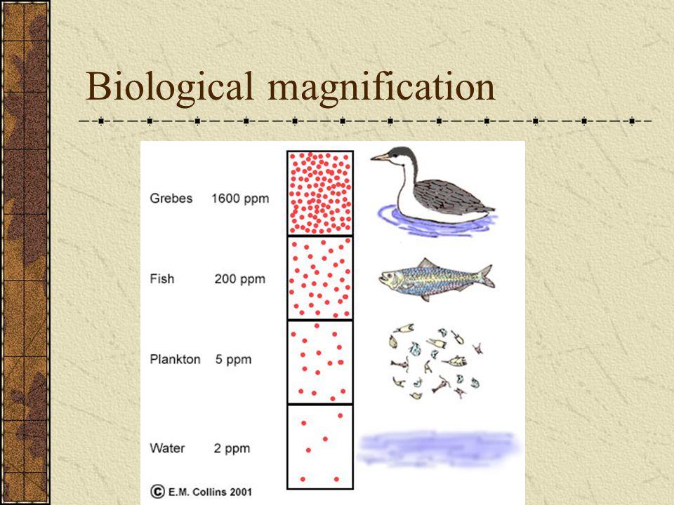 Bio magnification of DDT