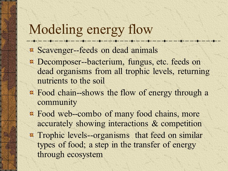 Modeling energy flow Scavenger--feeds on dead animals Decomposer--bacterium, fungus, etc. feeds on dead organisms from all trophic levels, returning n